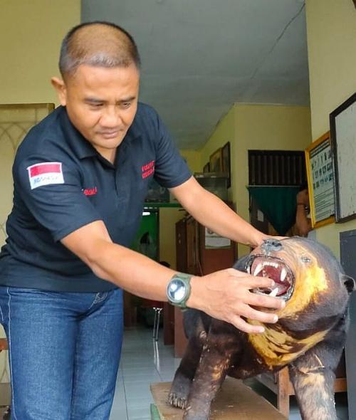 BKSDA Amankan Beruang Madu Yang Diawetkan dari Warga Cilegon (foto: Sindonews/Rasyid Ridho)