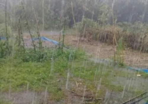 Fenomena hujan es Foto: Robert Fernando