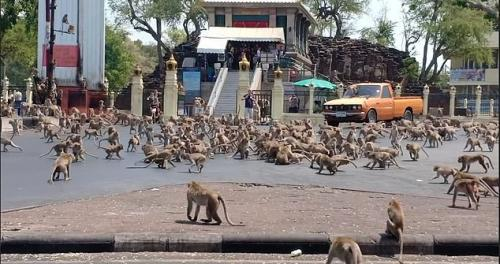 Monyet