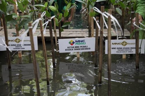 Peduli Lingkungan, MNC Leasing Gandeng MNC Peduli Tanam 1000 Pohon Mangrove di kawasan Pantai Indah Kapuk Jakarta Utara. (Ist)Peduli Lingkungan, MNC Leasing Gandeng MNC Peduli Tanam 1000 Pohon Mangrove di kawasan Pantai Indah Kapuk Jakarta Utara. (Ist)