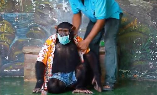 Simpanse