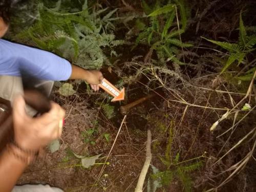 Penemuan kerangka manusia di kebun sawit Tanjungjabung Barat. (Foto: Azhari Sultan/Okezone)