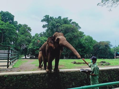 (Foto : Taman Margasatwa Ragunan)