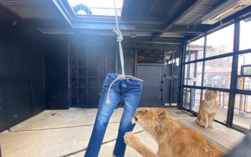 Celana jeans singa