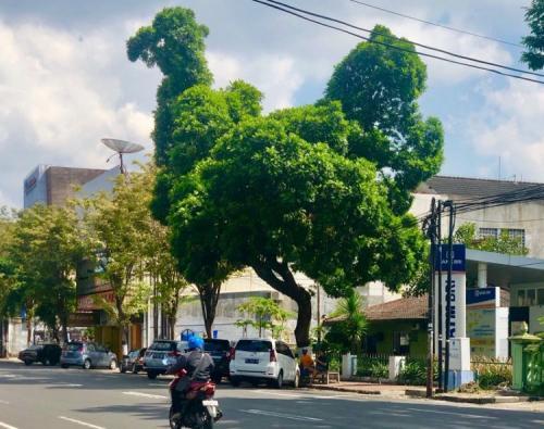 Pohon bentuk ayam