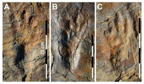 Spesies buaya purba yang hidup sekitar 120 juta tahun lalu mungkin berjalan dengan dua kaki belakang.
