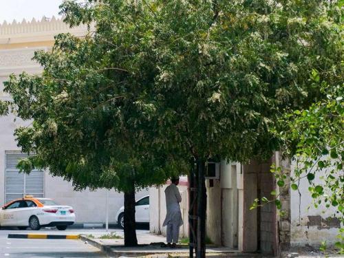 Muslim UEA sholat di bawah pohon. (Foto: Ahmed Ramzan/Gulf News)