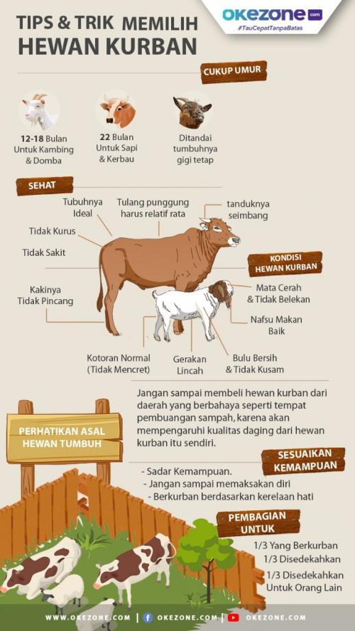Info grafis hewan kurban. (Foto: Okezone)