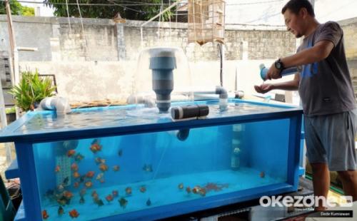 Pelihara Ikan
