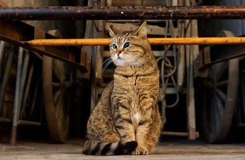 Kucing merupakan salah satu hewan yang mampu hidup di sekitar manusia.