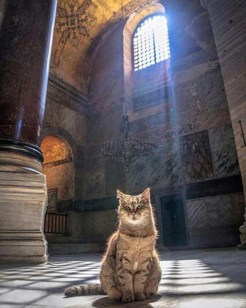 Gli si kucing penjaga Hagia Sophia. (Foto: Instagram @hagiasophiacat)