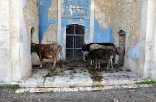 Masjid Agdam di Azerbaijan berubah jadi kandang ternak. (Foto: Istimewa/Anews)