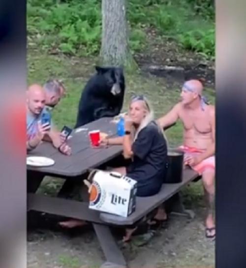 beruang ikut pesta