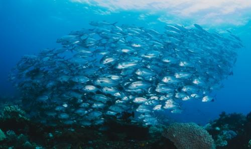 Ikan laut. (Foto: Freepik)