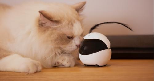 Kucing biasa menjadi hewan peliharaan dan hidup di tengah-tengah manusia.