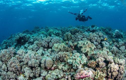 Laut Wakatobi