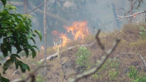Hutan lindung di Kabupaten Sikka, NTT, terbakar. (iNews/Joni Nura)
