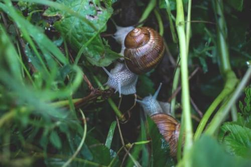 Siput. (Foto: Freestocks/Unsplash)