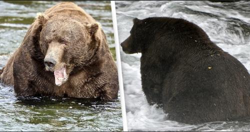 Beruang Tergemuk
