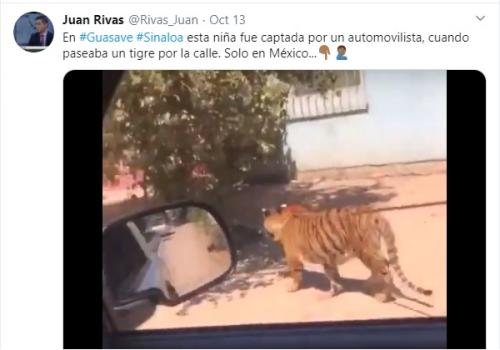 Sebuah video menunjukkan seorang gadis muda yang terlihat sedang berjalan-jalan dengan seekor harimau di Meksiko.