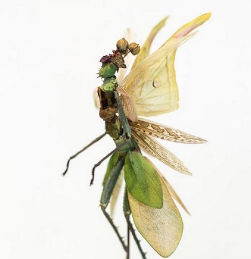 peri dari serangga