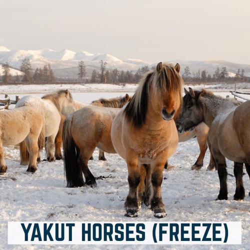 Kuda Rusia
