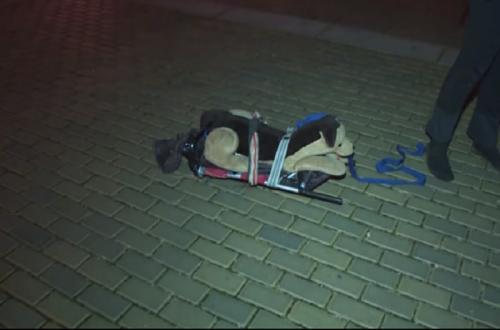Boneka anjing yang dibawa