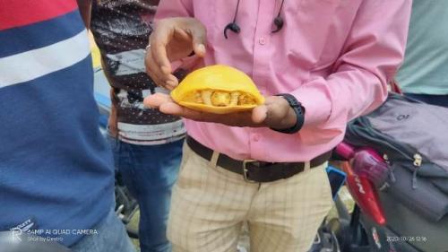 Kura-kura kuning langka ditemukan di India. (Foto: Twitter @deva_iitkgp)