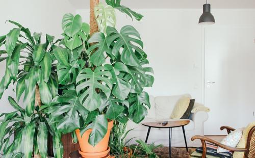 Sudahkah Anda tahu bahwa memelihara tanaman ternyata memiliki banyak manfaat.