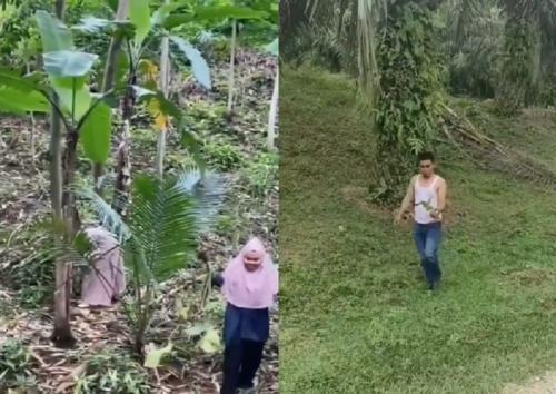 Pemburu Tanaman Hias (instagram plg_repost)