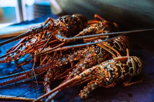 Lobster. (Foto: Meritt Thomas/Unsplash)