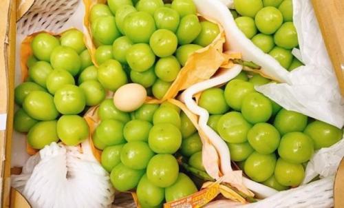 Anggur raksasa varietas baru lebih besar dari telur ayam. (Foto: VietnamNet/Oddity Central)