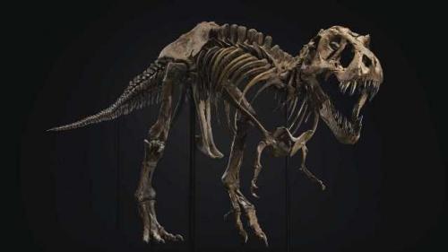 Kerangka T-Rex Stan. (Foto: Rumah Lelang Christie's/Fox News)