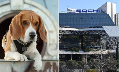 Harpo, anjing korban penganiayaan petugas bandara