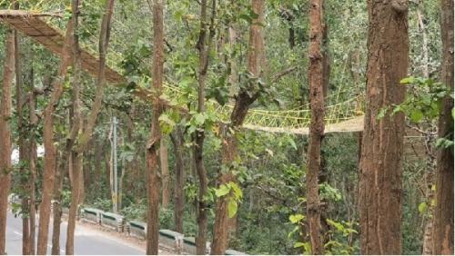 Jembatan unik khusus binatang di India
