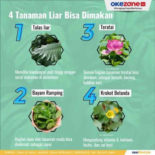 Infografis tanaman liar bisa dimakan. (Foto: Okezone)