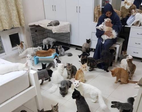 Maryam al-Balushi yang memelihara 480 kucing dan 12 anjing di rumah