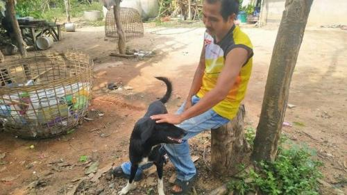 Anjing Ping Pong di Thailand menyelamatkan bayi yang dikubur hidup-hidup oleh orangtuanya. (Foto: Khaosod/BBC)
