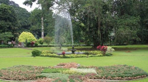 Ilustrasi kebun