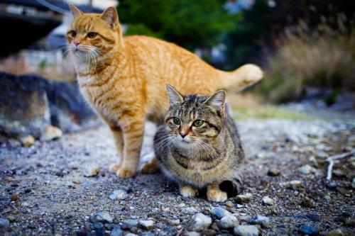 Kucing. (Foto: Okezone)
