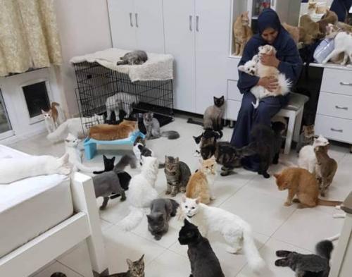 Maryam al Balushi asal Oman memelihara 480 kucing dan 12 anjing. (Foto: Twitter/Oddity Central)