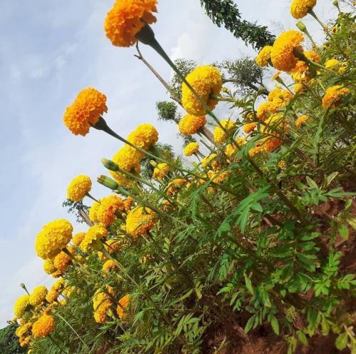 Taman bunga tepi sawah