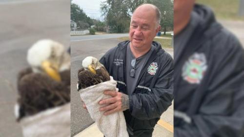 Elang gundul terjerat kail pancing. (Foto: Pasco County Fire Rescue/Fox News)