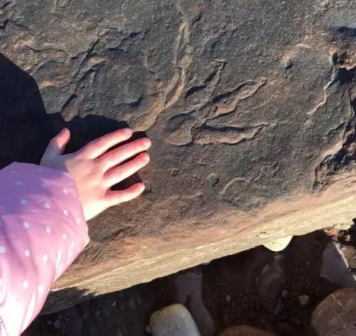 Jejak dinosaurus berusia 220 juta tahun. (Foto: Thesun)