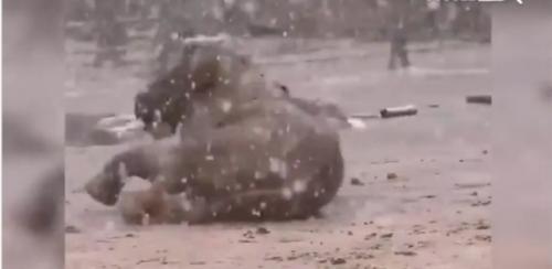Gajah guling-guling senang salju turun. (Foto: Instagram @faktanyagoogle)