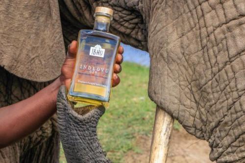 miras gajah