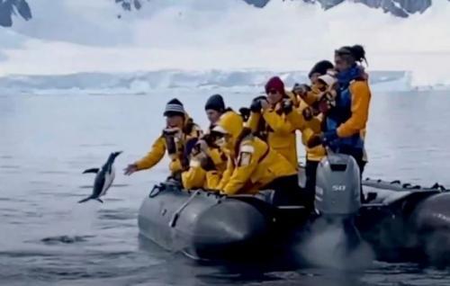 Penguin Loncat