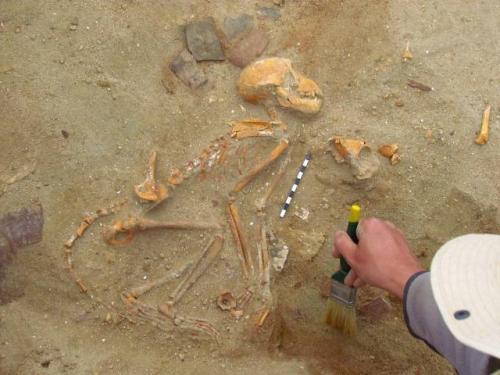 Penemuan kuburan hewan peliharaan tertua di Mesir. (Foto: Twitter @marcosolopolo)