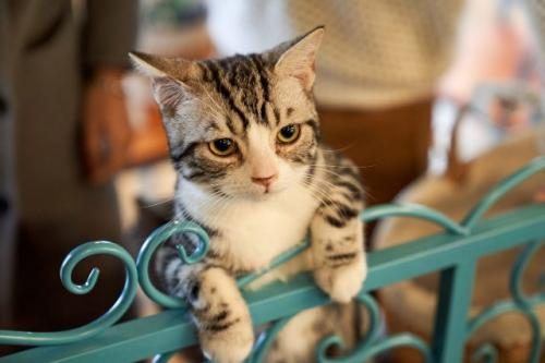 Kucing. (Foto: Chunleu Ju/Unsplash)