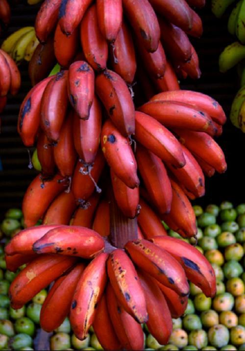 pisang merah
